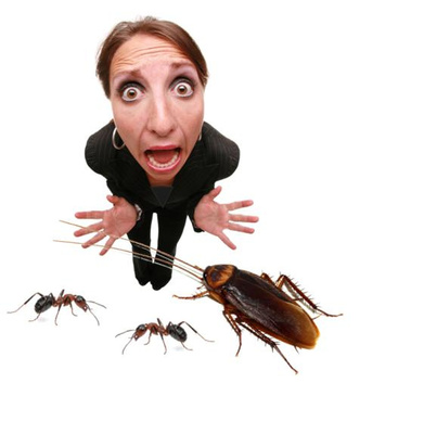 Guest Post: Non-Toxic Pest Control Tips