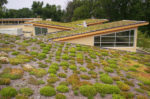 Greening Your Roof to Life